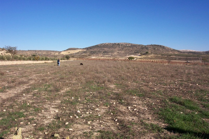 Large building plot for sale in Pinoso on Spains Costa Blanca. For sale near Murcia cheap plot for sale.