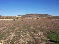 Pinoso on Spains Costa Blanca cheap bargain plot of land for sale near Murcia and Fortuna, plot for sale.