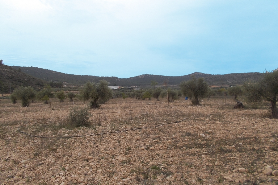 Property for sale - Plot for sale - Yecla