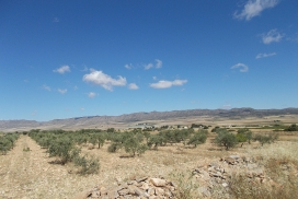 Plot for sale - Plot of land for sale - Yecla - Yecla